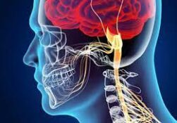 آشنایی با متخصص مغز و اعصاب