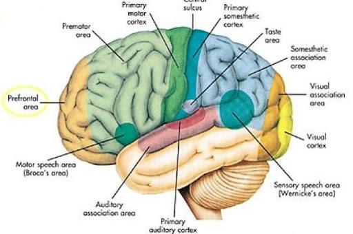 اصطلاحات مغز و اعصاب
